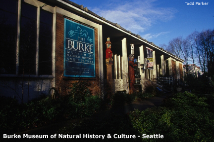 burkemuseum6